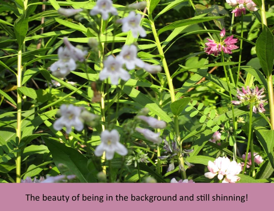 Background Shinning
